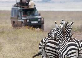 tanzanie zebres