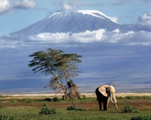 kilimanjaro Tanzanie 300x239 photo