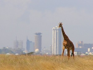 Giraffe Nairobi 300x225 photo