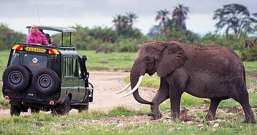 La crise Ebola est un coup dur pour l'industrie du safari