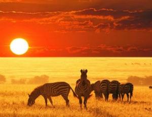 afrique du sud-safari