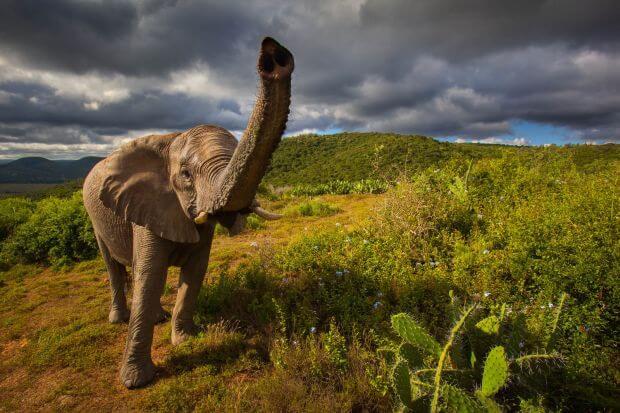 Ça vous dirait un road trip en Afrique?